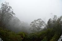 Foggy lookout to Three Sisters